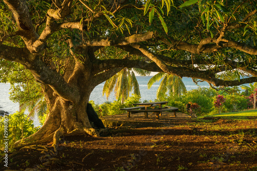Photo A mature Banyan tree capture at sunset from the viewpoint of being under the canopy