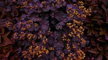 Invert Colour Of Plant Leaves