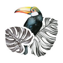 Toucan Bird Surrounded By Trop...