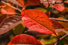 The Colors Of Autumn. Autumn L...