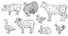 Animal Meat Cut Parts Set - Bu...