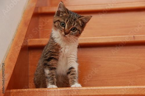 Obraz na plátne  Chaton dans l'escalier