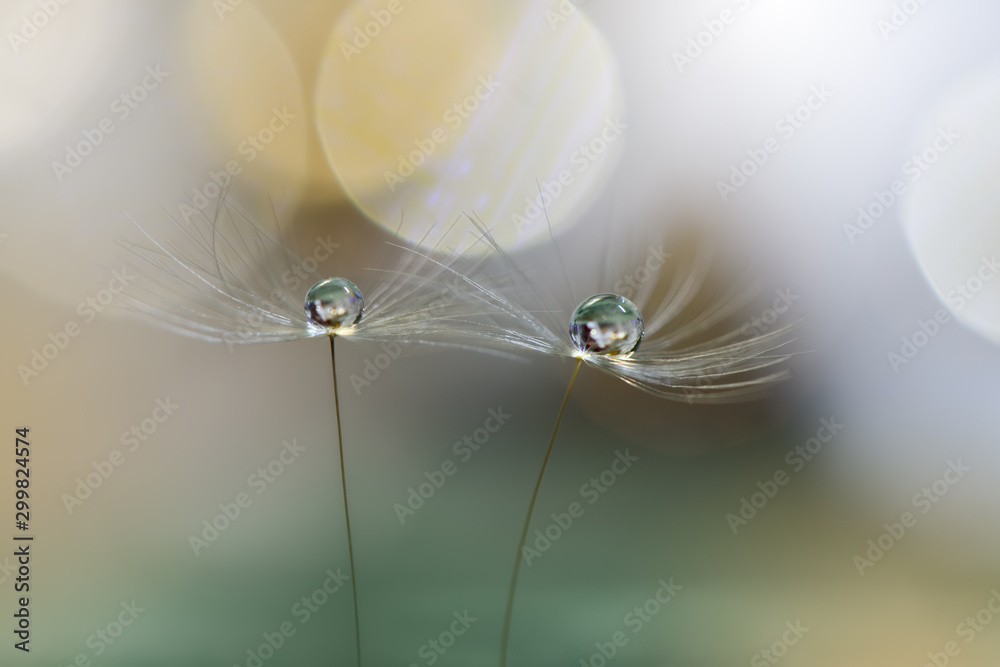 Macro Photography.Floral abstract pastel background with copy space.Dandelion flower in soft style.Green Nature Background.Blurred space for your text.Stylish modern nature background with two flowers