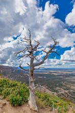 """Dead Tree View"""