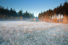 Moon Over Frosted Forest Meado...