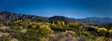 New Mexico Fall III