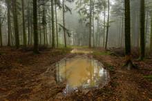Un Chemin Forestier Avec Une G...