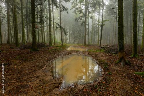 Canvas Prints Road in forest un chemin forestier avec une grande flaque d'eau boueuse