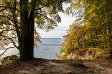 A Thick Tree In The Foreground Next To The Cliff Of The High Chalk Rocks On The German Baltic Sea Island Ruegen. A View Of The Sea And The Autumnally Colorful Coastal Landscape.