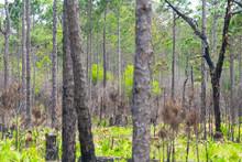 Destin Or Miramar Beach Swamp ...