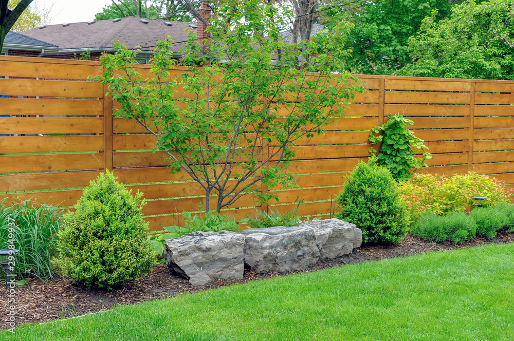 Fototapeta An Asian inspired and beautifully maintained garden features rockery and minimalist style cedar fencing.