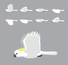 White Sulphur Crested Cockatoo...