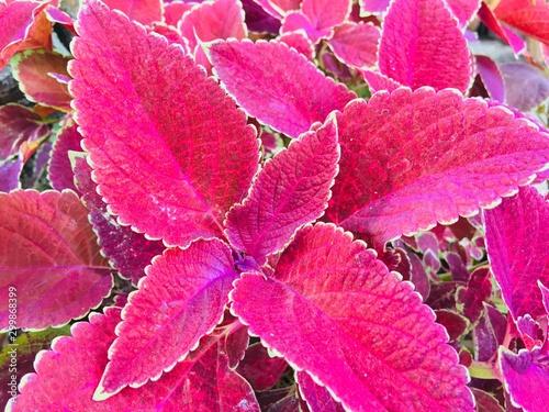 Spoed Fotobehang Roze plants and flower outdoor picture
