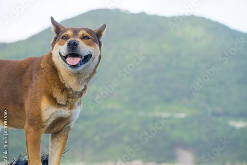 Cuadros en Lienzo 野良犬