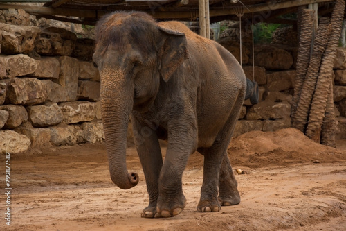 elephant standing on sandy surface in reserve