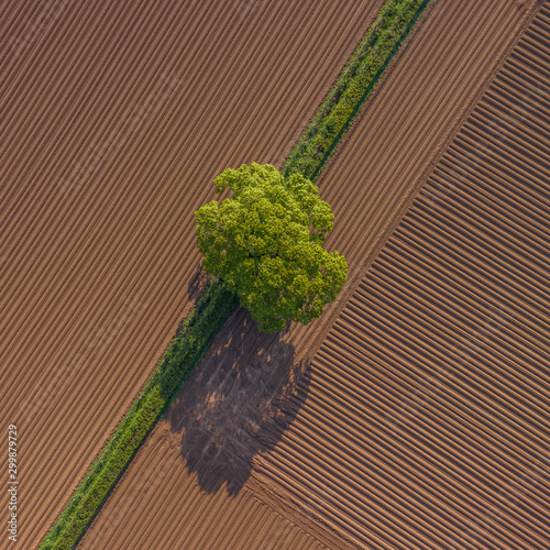 A single tree in the middle of fields Wallpaper Mural