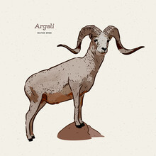 The Argali, Or The Mountain Sh...