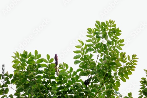 Autocollant pour porte Arbre A bunch of tropical plant with leaves branches on white isolated background for green foliage backdrop