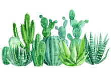 Watercolor Cacti On A White Ba...