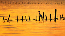 Egret On Bamboo In The Sea