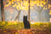 Black Cat Sits In The Middle O...