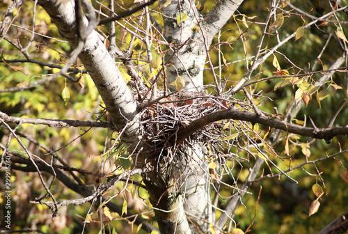 Fotografie, Tablou  convolute nest on tree