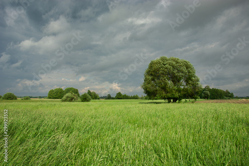 Recess Fitting Culture Green meadow with tall grasses, large tree and rainy sky