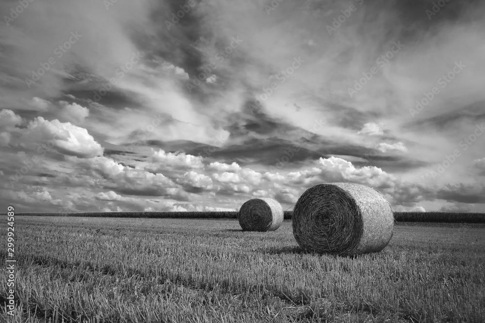 Fototapeta nach der Getreide Ernte in Schwarzweiß
