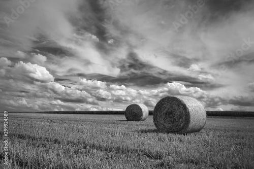 Foto auf Leinwand Rosa dunkel nach der Getreide Ernte in Schwarzweiß