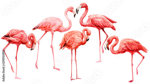 Photo  set of  pink flamingo on an isolated white background, watercolor illustration