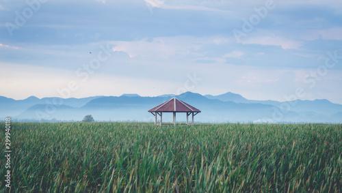 Foto auf Leinwand Khaki scenary of fresh water lotus lake in San Roi Yod Nationpark Thailand