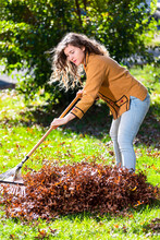 Young Woman Girl Working In Backyard Raking Collecting Of Dry Autumn Foliage Oak Leaves With Green Grass Lawn