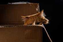 An Orange Cat Slinks Down In A Cardboard Box