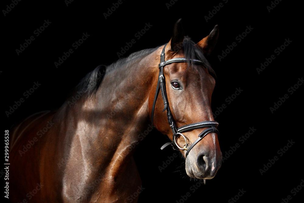 Fototapeta Brown horse portrait on black background