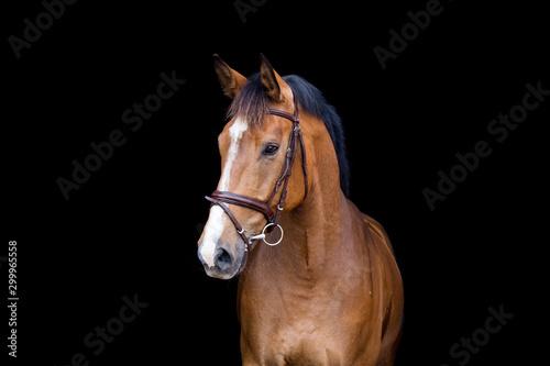 Cuadros en Lienzo Brown horse portrait on black background