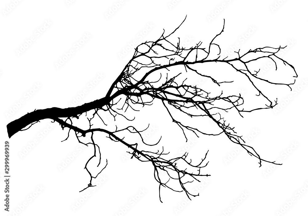 Fototapeta Chestnut tree branch silhouette, vector illustration.
