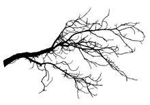 Chestnut Tree Branch Silhouett...