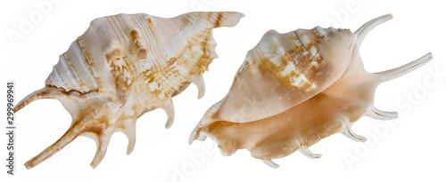 Deep sea shell isolated. From different sides Wallpaper Mural
