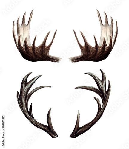 Photo Watercolor set of deer antlers, Moose antlers, hand painted illustration isolate
