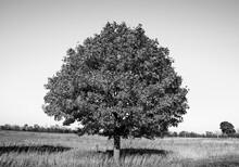 Tree In Autumn Under Blue Sky