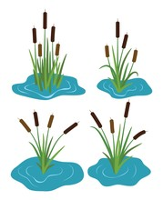 Vector Set Of Typhaceae Marsh ...