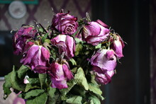 Bouquet With Faded Buds. Withe...