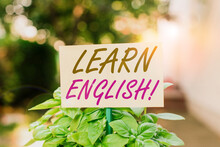 Handwriting Text Writing Learn English. Conceptual Photo Gain Acquire Knowledge In New Language By Study Plain Empty Paper Attached To A Stick And Placed In The Green Leafy Plants