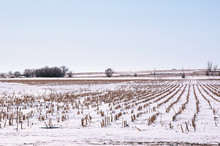 Winter Snow Covers A Field Of ...