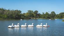 Swan Shaped Paddle Boats In Lake Pond Lagoon