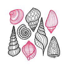 Hand Drawn Set Of Various Seashell