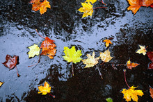 Wet Autumn Leaves On Pavement ...