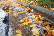 Fall Leaves Clogging Stormwater Drains At The Curb In The Street
