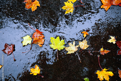 Wet autumn leaves on pavement in the rain