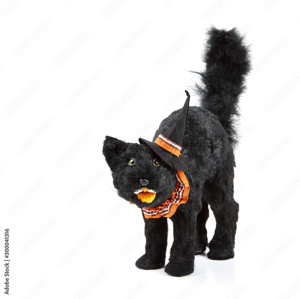 Fototapety, obrazy: Black cat decoration for Halloween wearing a witch hat